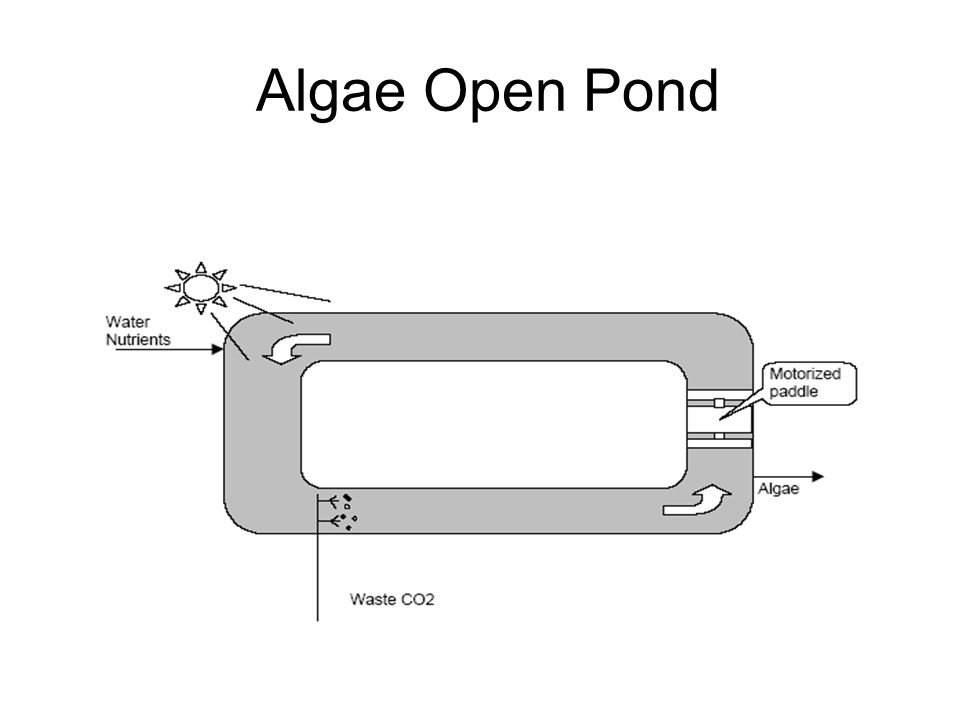 Algae Open Pond