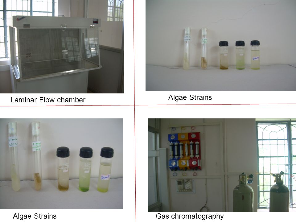 Gas chromatographyAlgae Strains Laminar Flow chamber