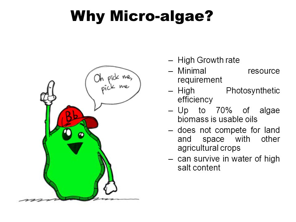 –High Growth rate –Minimal resource requirement –High Photosynthetic efficiency –Up to 70% of algae biomass is usable oils –does not compete for land and space with other agricultural crops –can survive in water of high salt content Why Micro-algae