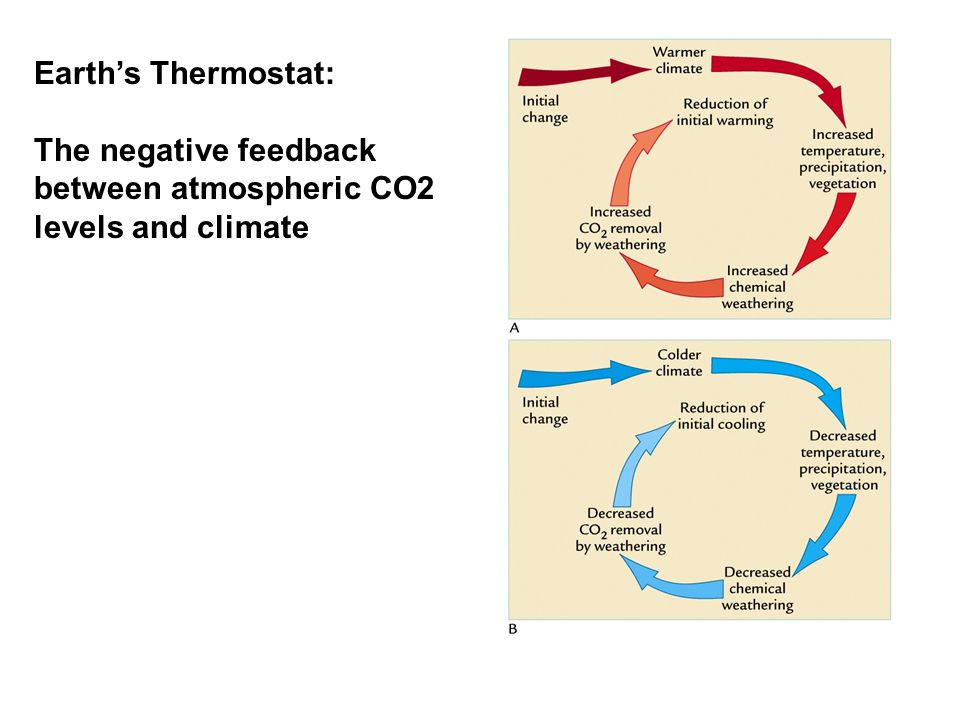 Earth's Thermostat: The negative feedback between atmospheric CO2 levels and climate