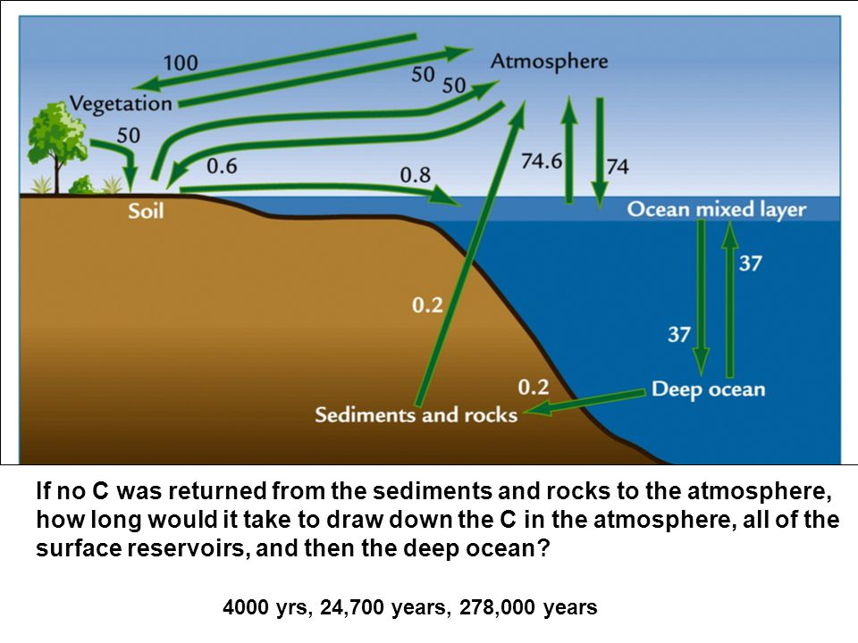 If no C was returned from the sediments and rocks to the atmosphere, how long would it take to draw down the C in the atmosphere, all of the surface reservoirs, and then the deep ocean.