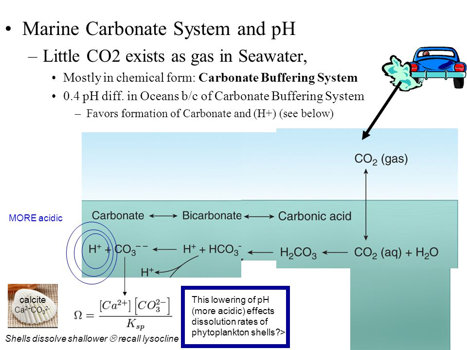 Marine Carbonate System and pH –Little CO2 exists as gas in Seawater, Mostly in chemical form: Carbonate Buffering System 0.4 pH diff.