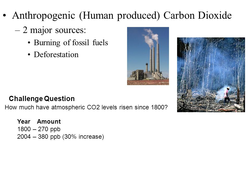 Anthropogenic (Human produced) Carbon Dioxide –2 major sources: Burning of fossil fuels Deforestation How much have atmospheric CO2 levels risen since 1800.