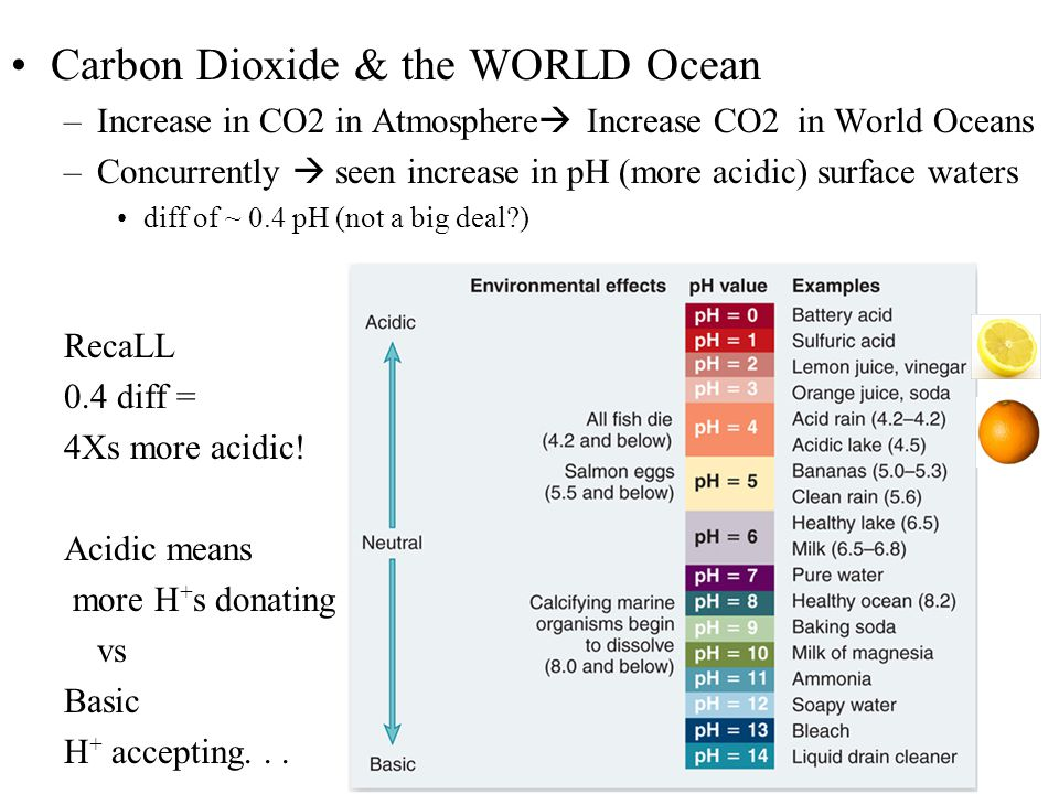 Carbon Dioxide & the WORLD Ocean –Increase in CO2 in Atmosphere  Increase CO2 in World Oceans –Concurrently  seen increase in pH (more acidic) surface waters diff of ~ 0.4 pH (not a big deal ) RecaLL 0.4 diff = 4Xs more acidic.