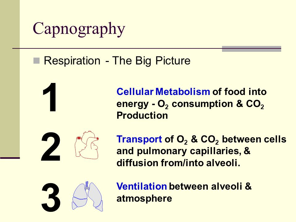 Capnography Respiration - The Big Picture 1 Cellular Metabolism of food into energy - O 2 consumption & CO 2 Production Transport of O 2 & CO 2 between cells and pulmonary capillaries, & diffusion from/into alveoli.