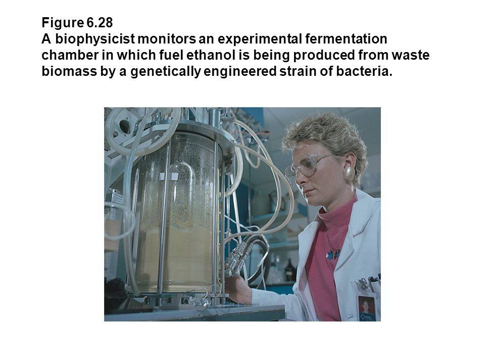 Figure 6.28 A biophysicist monitors an experimental fermentation chamber in which fuel ethanol is being produced from waste biomass by a genetically e