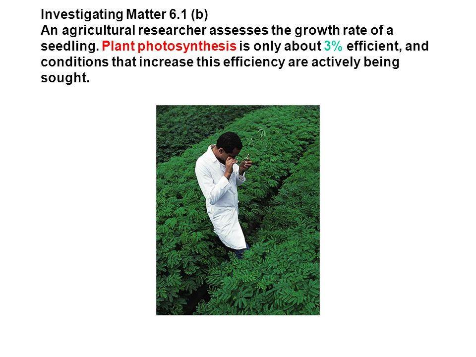 Investigating Matter 6.1 (b) An agricultural researcher assesses the growth rate of a seedling. Plant photosynthesis is only about 3% efficient, and c