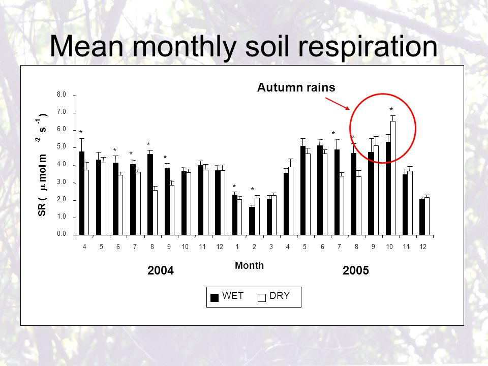 Mean monthly soil respiration 0.0 1.0 2.0 3.0 4.0 5.0 6.0 7.0 8.0 456789101112123456789101112 Month SR (  mol m -2 s ) WETDRY * * * * * * * * * * 20042005 Autumn rains