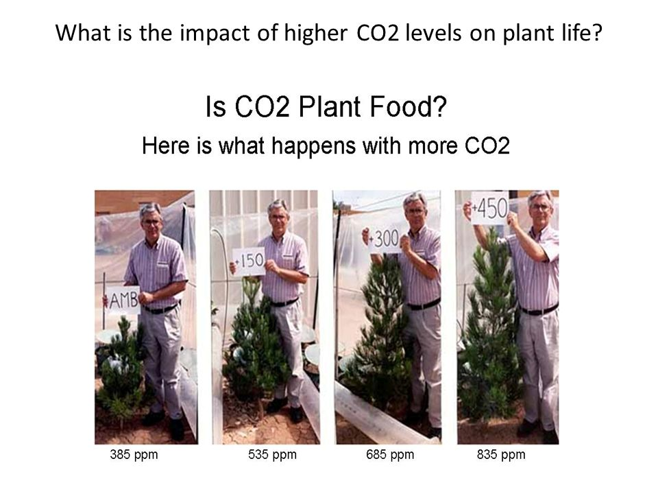 What is the impact of higher CO2 levels on plant life