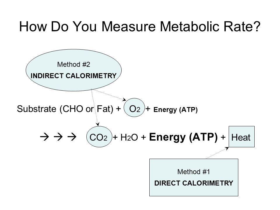 Method #1 DIRECT CALORIMETRY Total Energy from Metabolism...