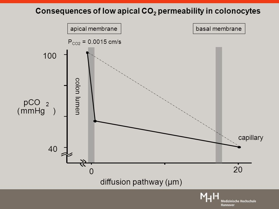 Consequences of low apical CO 2 permeability in colonocytes 40 100 pCO 2 (mmHg) diffusion pathway (µm) 0 20 apical membrane colon lumen basal membrane capillary P CO2 = 0.0015 cm/s