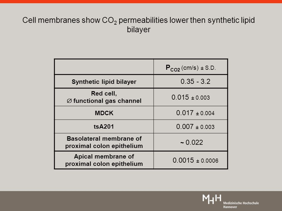 Cell membranes show CO 2 permeabilities lower then synthetic lipid bilayer P CO2 (cm/s) ± S.D.