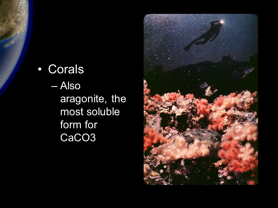 Corals –Also aragonite, the most soluble form for CaCO3