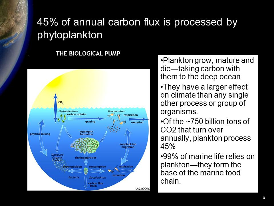 3 Plankton grow, mature and die—taking carbon with them to the deep ocean They have a larger effect on climate than any single other process or group of organisms.
