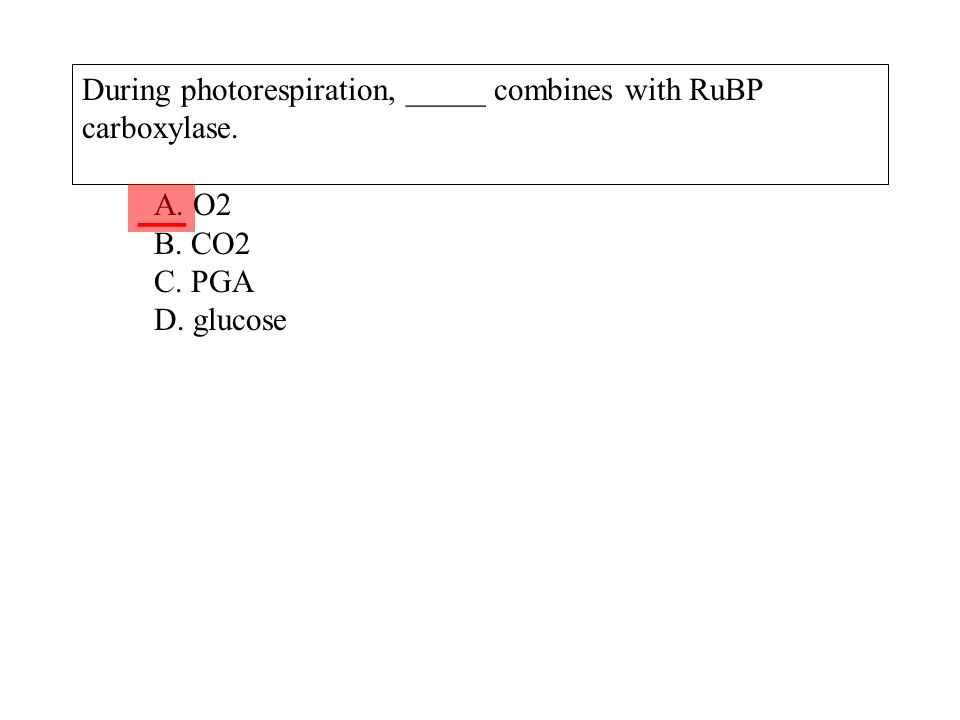 During photorespiration, _____ combines with RuBP carboxylase. A. O2 B. CO2 C. PGA D. glucose ___