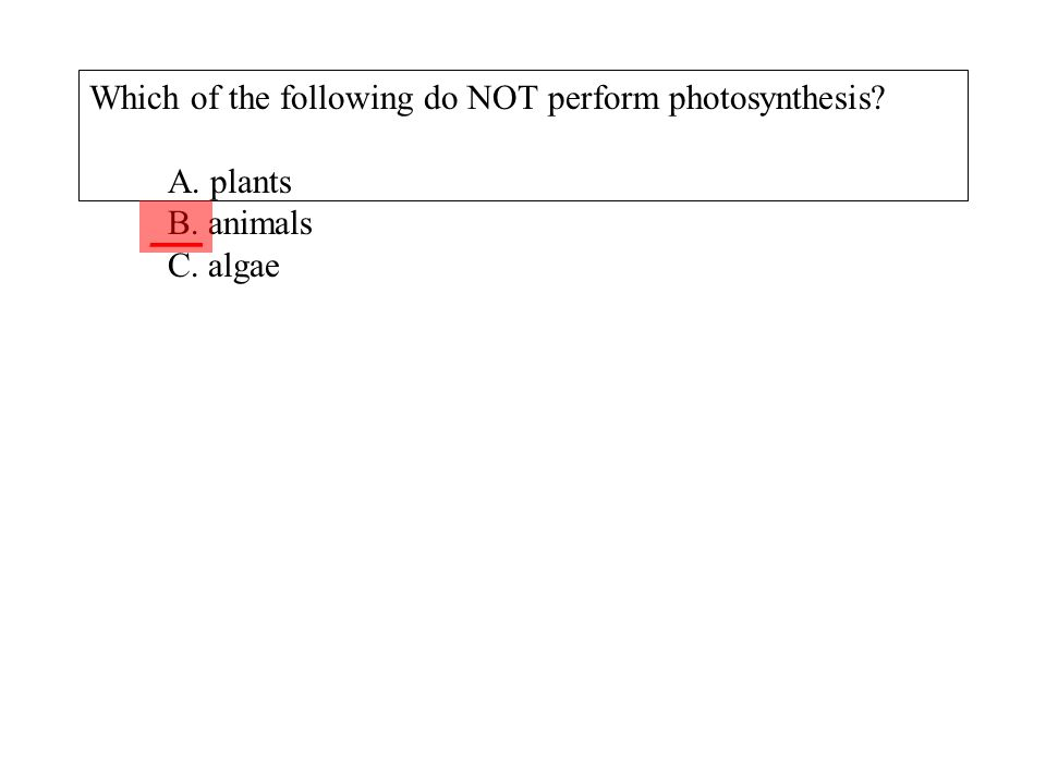 Which of the following do NOT perform photosynthesis? A. plants B. animals C. algae ___