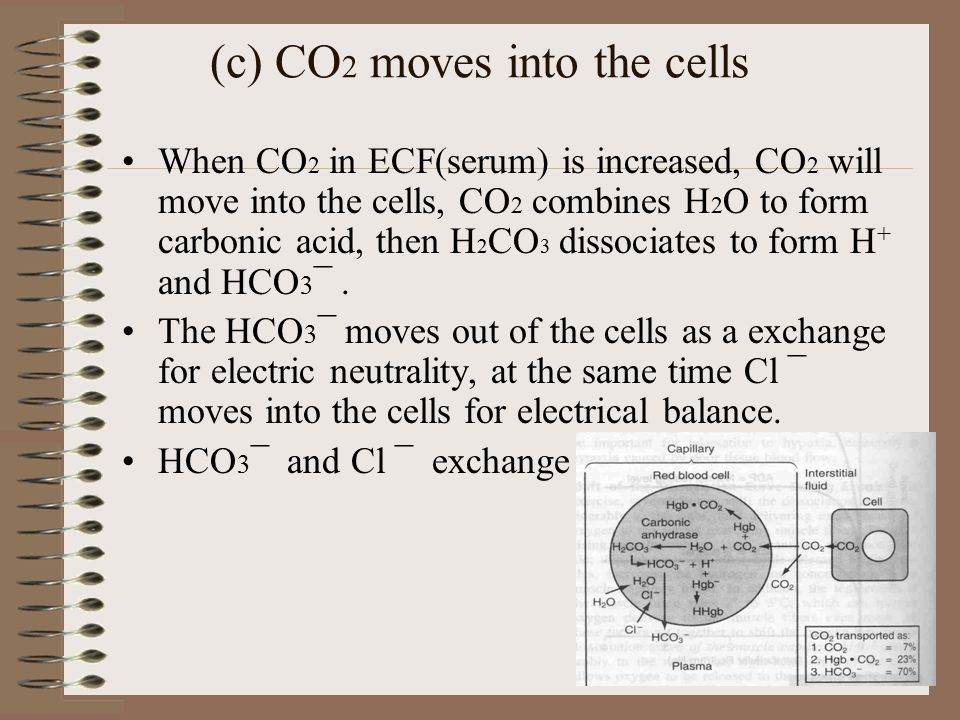(c) CO 2 moves into the cells When CO 2 in ECF(serum) is increased, CO 2 will move into the cells, CO 2 combines H 2 O to form carbonic acid, then H 2 CO 3 dissociates to form H + and HCO 3 ¯.
