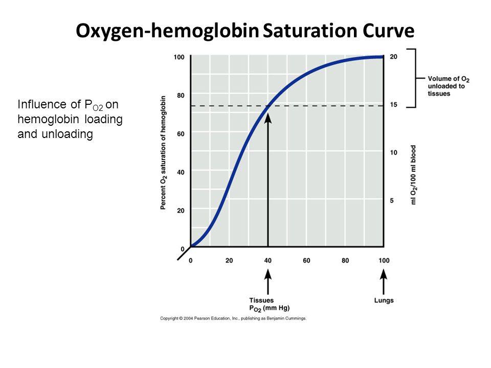 Oxygen-hemoglobin Saturation Curve Influence of P O2 on hemoglobin loading and unloading