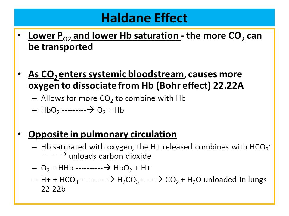 Haldane Effect Lower P O2 and lower Hb saturation - the more CO 2 can be transported As CO 2 enters systemic bloodstream, causes more oxygen to dissoc
