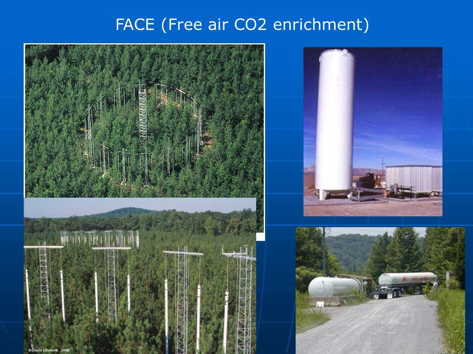 FACE (Free air CO2 enrichment)