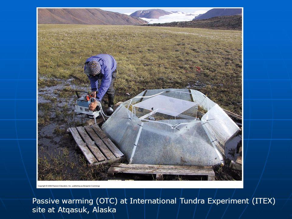 Passive warming (OTC) at International Tundra Experiment (ITEX) site at Atqasuk, Alaska