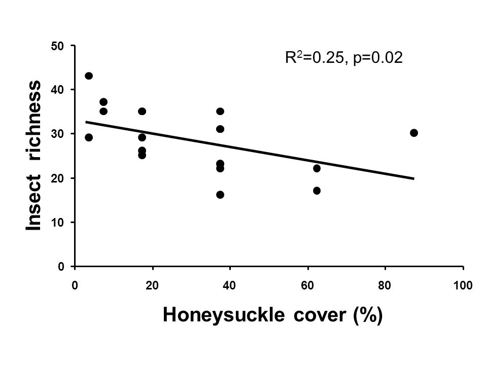 0 10 20 30 40 50 020406080100 Honeysuckle cover (%) Insect richness R 2 =0.25, p=0.02