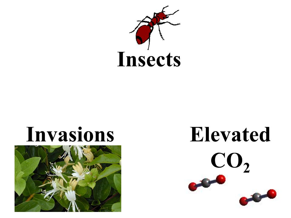 Insects InvasionsElevated CO 2