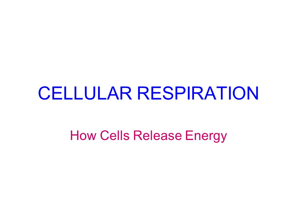 CELLULAR RESPIRATION How Cells Release Energy