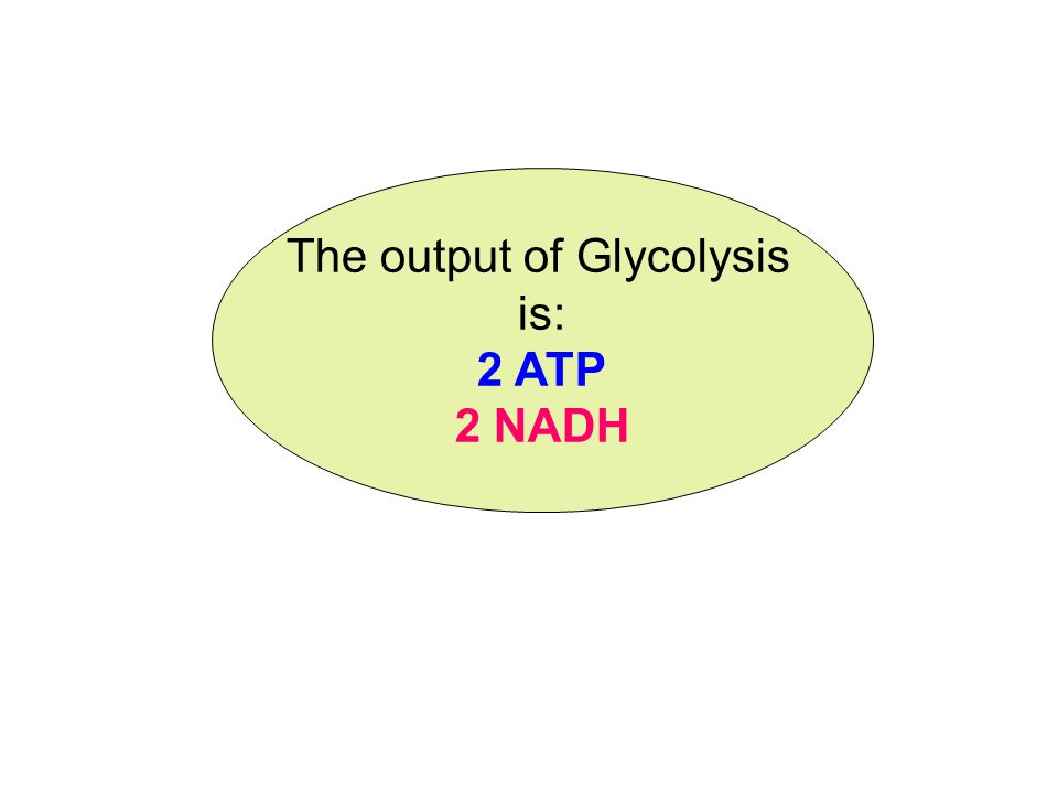 1. Glycolysis (Sugar Splitting) C 6 H 12 O 6 Glucose 2 NAD+2 NADH 2 ATP2 ADP Takes place in the cytoplasm of all cells Pyruvate