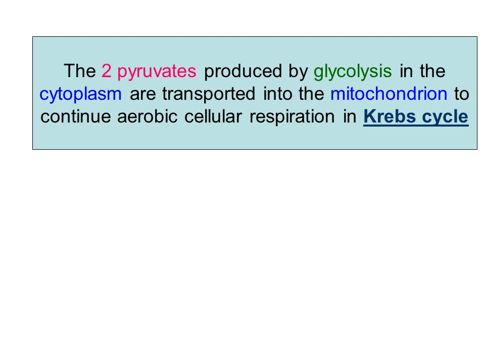 The output of Glycolysis is: 2 ATP 2 NADH