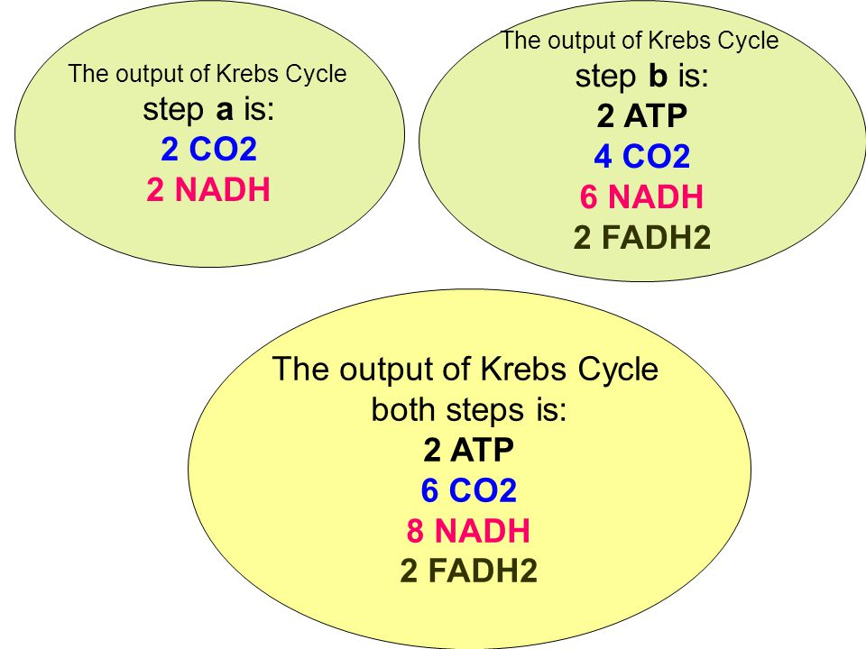 The output of Krebs Cycle step b is: 2 ATP 4 CO2 6 NADH 2 FADH2