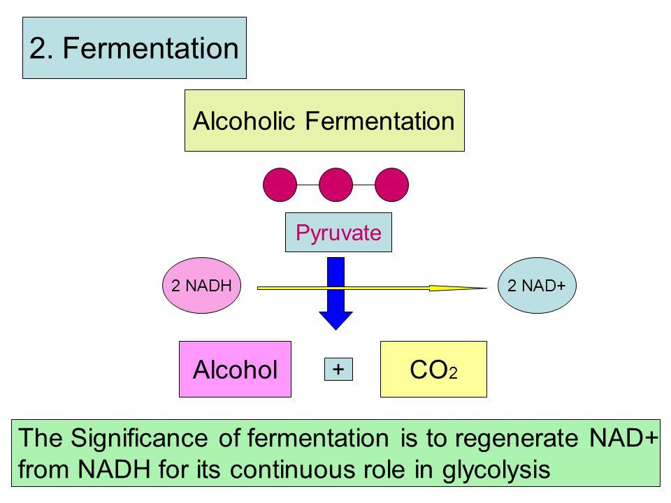 3. Krebs Cycle Step b 1 st Acetyl-CoA CoA + 4-C- compound 6-C-Compound 2 CO2 1 ATP 3 NADH 1 FADH2