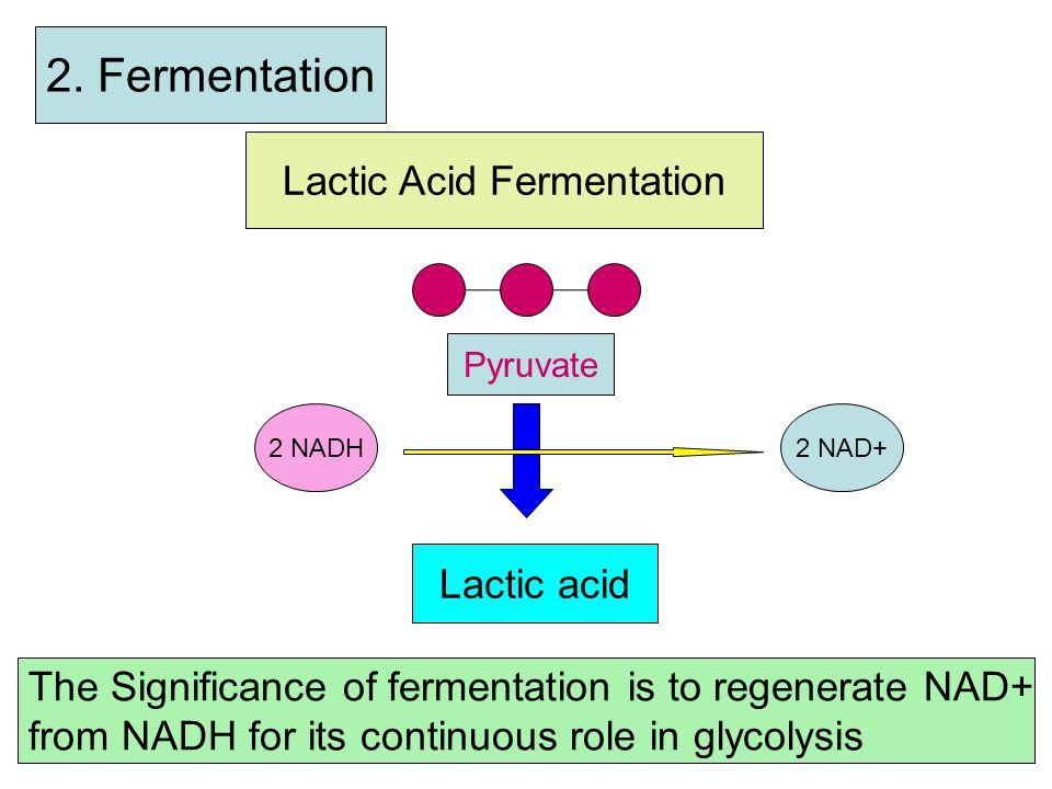 3. Krebs Cycle Step b 2 nd Acetyl-CoA CoA + 4-C- compound 6-C-Compound 2 CO2 1 ATP 3 NADH 1 FADH2