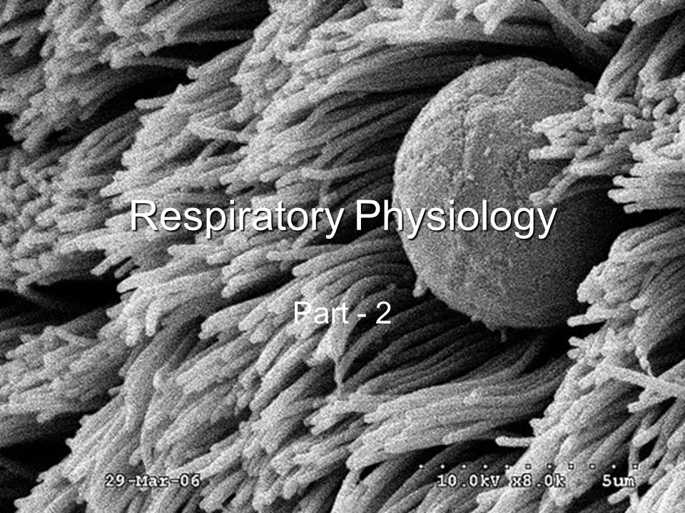 Lecture Outline Basics of the Respiratory System –Functions & functional anatomy Gas Laws Ventilation Diffusion & Solubility Gas Exchange –Lungs –Tissues Gas Transport in Blood Regulation of Ventilation & Impacts on –Gas levels, pH