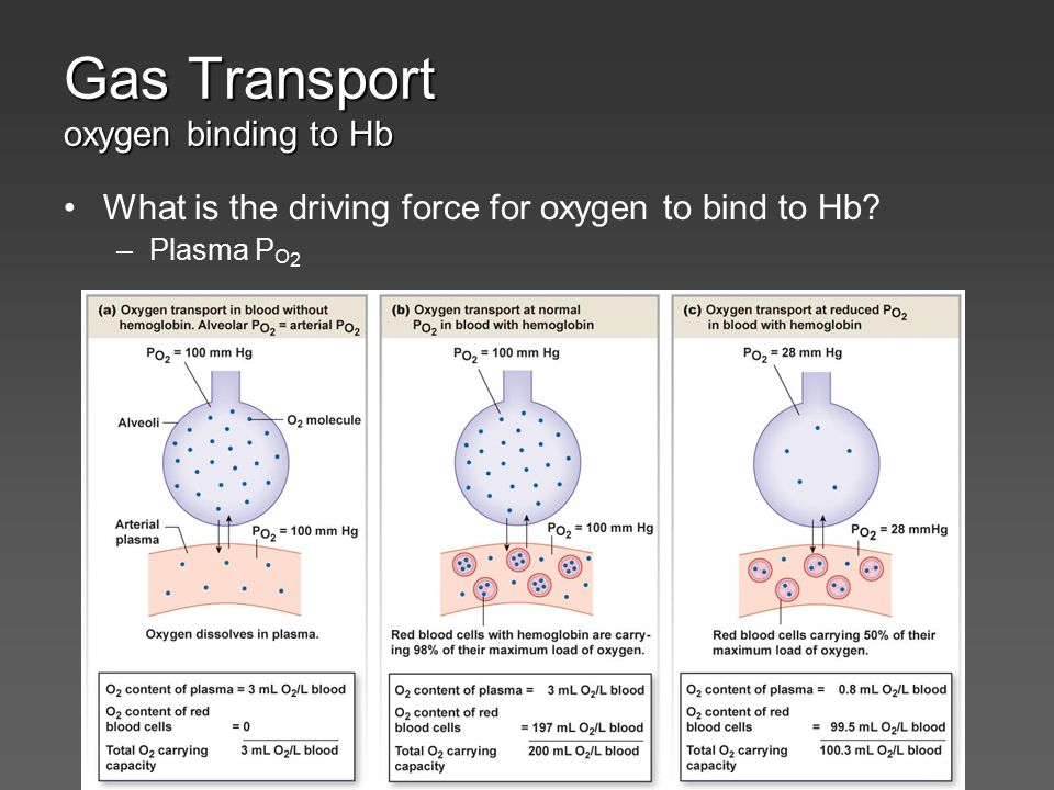Gas Transport oxygen binding to Hb What is the driving force for oxygen to bind to Hb? –Plasma P O 2