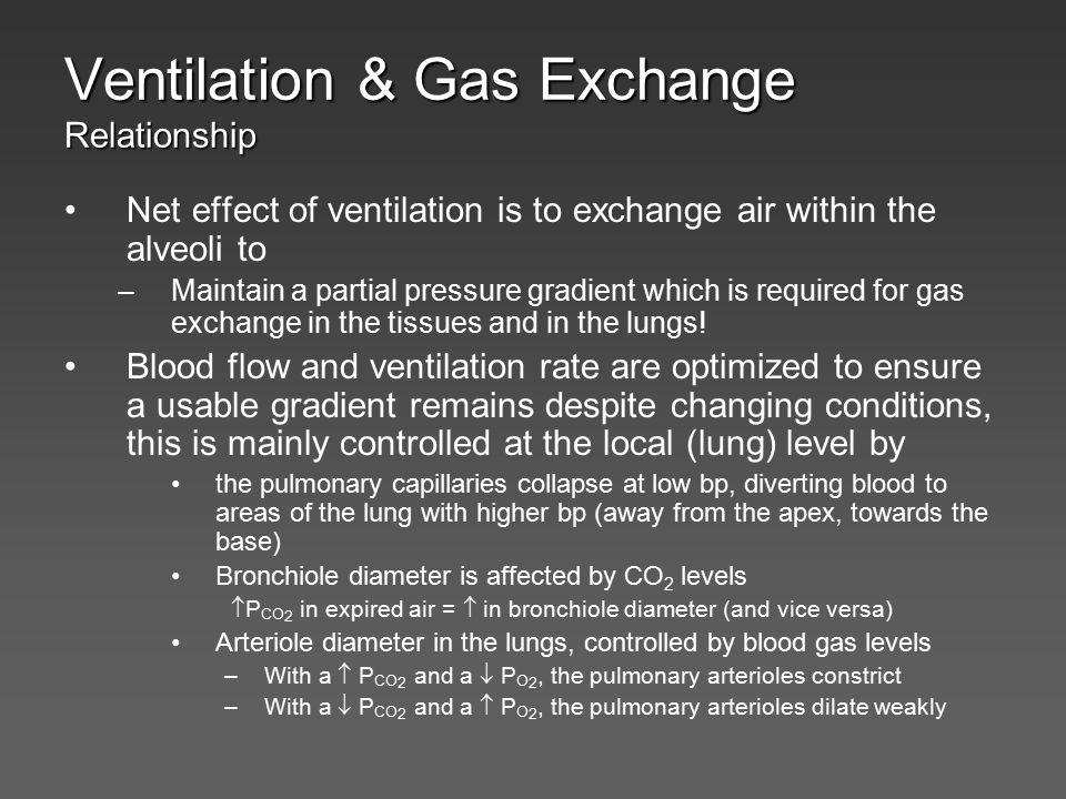 Regulation of Ventilation Ex. Chemoreceptors responses to plasma CO 2