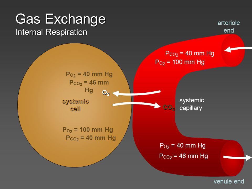 Gas Exchange What happens when alveolar P O 2 drops.