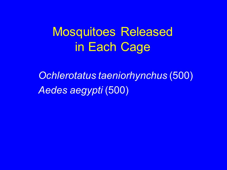 Mosquitoes Released in Each Cage Ochlerotatus taeniorhynchus (500) Aedes aegypti (500)