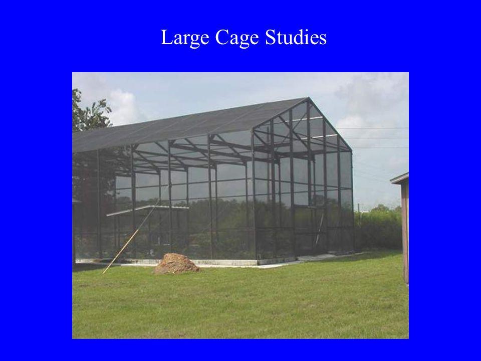 Large Cage Studies