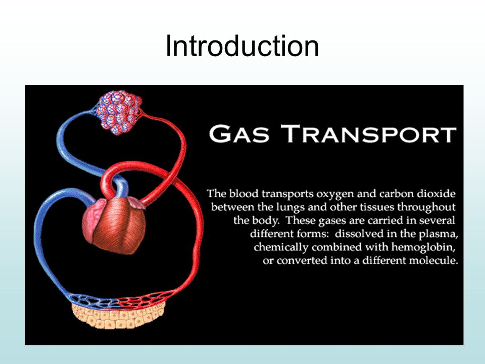 Goals For Learning To explore how O2 is transported in the blood.