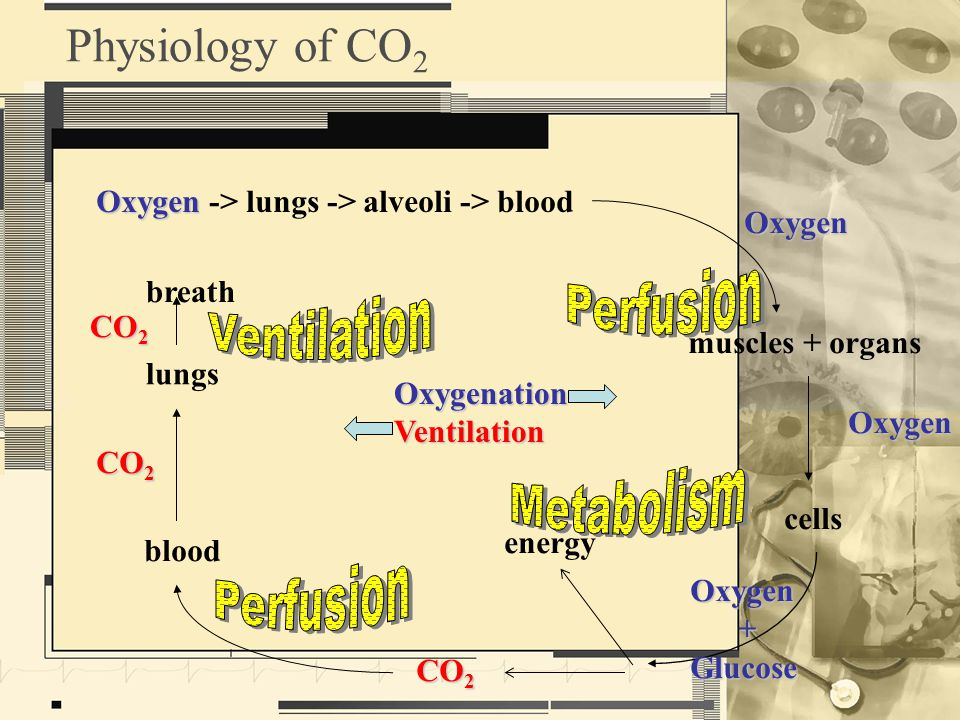 Oxygen Oxygen -> lungs -> alveoli -> blood muscles + organs Oxygen cells Oxygen Oxygen +Glucose energy CO 2 blood lungs CO 2 breath CO 2 Physiology of CO 2OxygenationVentilation