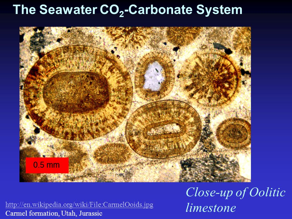 Calcification: Calcium carbonate precipitation can be written simply as: Ca 2+ + CO 3 2-   CaCO 3 (s) But biogenic CaCO 3 precipitation appears to occur primarily by the following reaction mechanism: Ca 2+ + 2HCO 3 -   CaCO 3(s) + CO 2 + H 2 O Thus, per mole of CaCO 3 formed, calcification i) consumes 2 mole of alkalinity, ii) consumes 1 mole of DIC and iii) produces 1 mole of CO 2 (i.e.