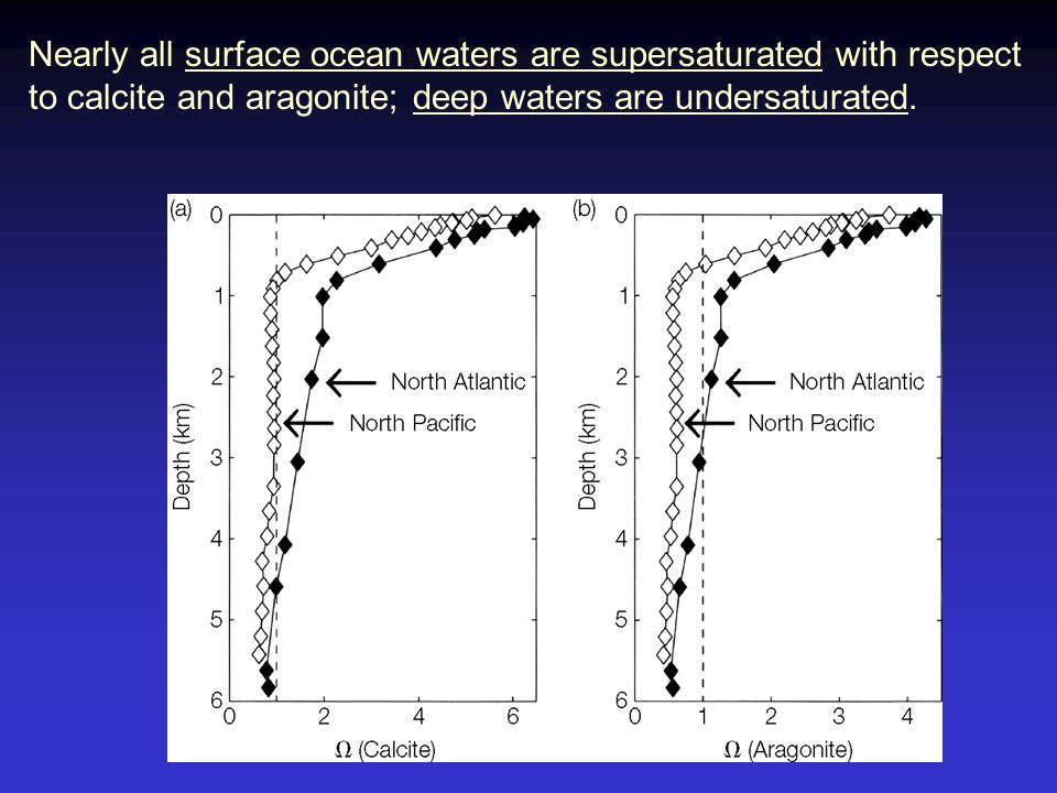 Nearly all surface ocean waters are supersaturated with respect to calcite and aragonite; deep waters are undersaturated.