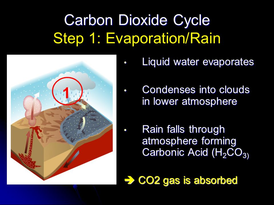 Carbon Dioxide Cycle Carbon Dioxide Cycle Step 1: Evaporation/Rain Liquid water evaporates Liquid water evaporates Condenses into clouds in lower atmo