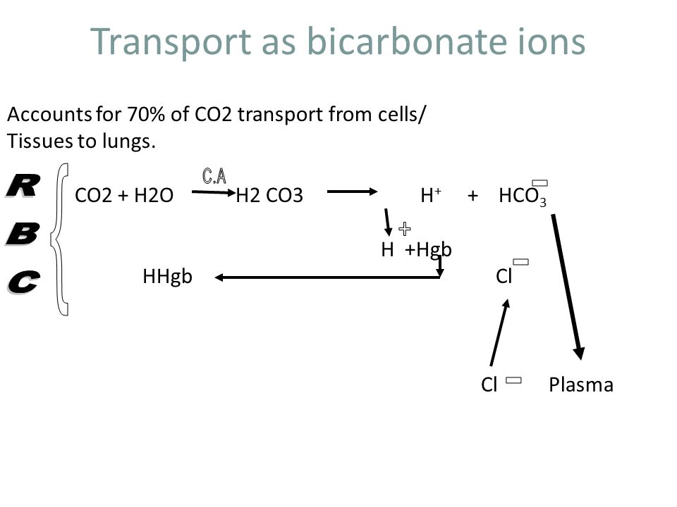 Transport as bicarbonate ions Accounts for 70% of CO2 transport from cells/ Tissues to lungs.