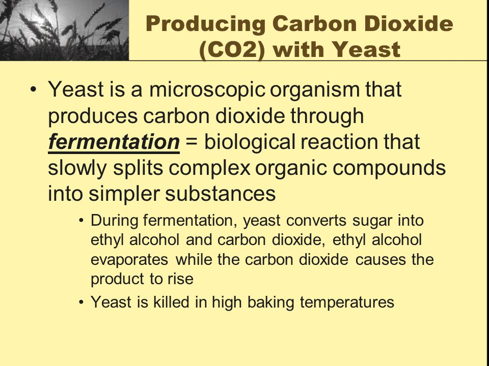 Producing Carbon Dioxide (CO2) with Yeast Yeast is a microscopic organism that produces carbon dioxide through fermentation = biological reaction that