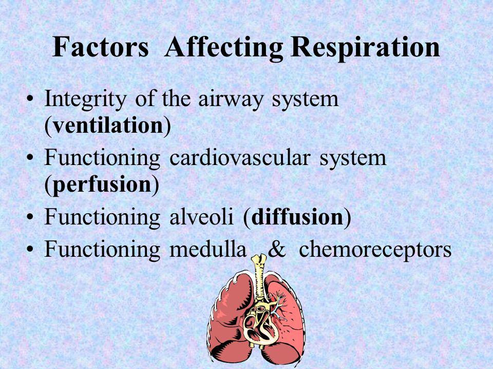 Checkpoint 1)T / F The pulmonary artery carries oxygenated blood away from the lungs. FALSE