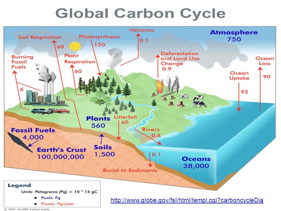 http://www.globe.gov/fsl/html/templ.cgi?carboncycleDia