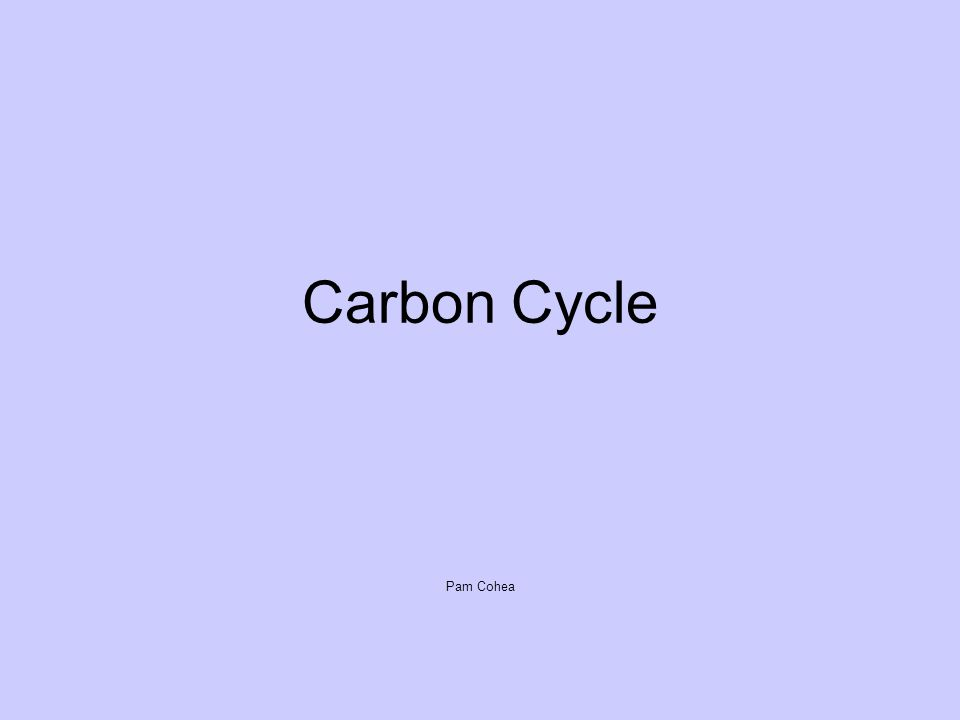 Carbon Cycle Pam Cohea