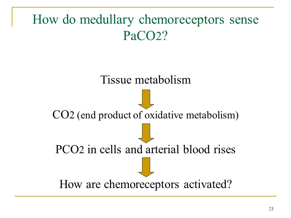 How do medullary chemoreceptors sense PaCO 2 ? Tissue metabolism CO 2 (end product of oxidative metabolism) PCO 2 in cells and arterial blood rises Ho